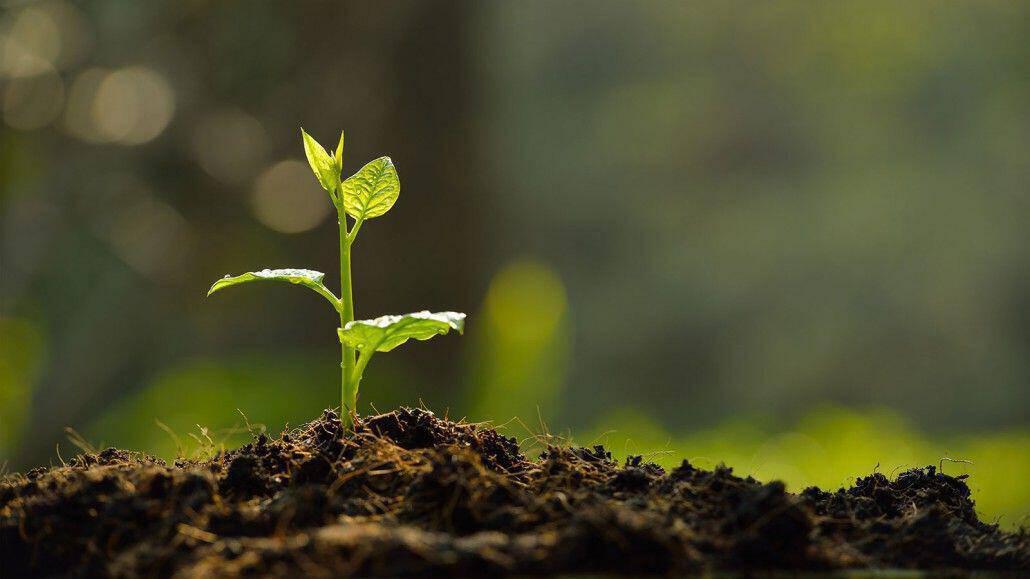 Αγροσελίδα  «Στερεύει» το γόνιμο χώμα στα νησιά και στην Κρήτη bcd4bc0ad22